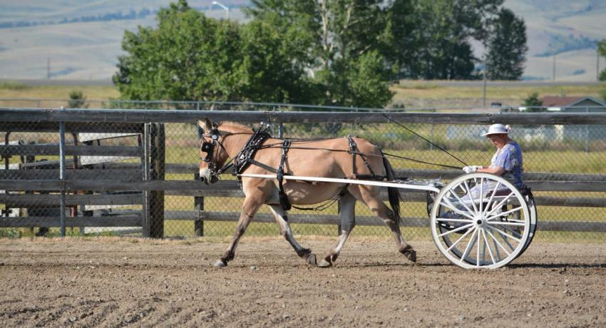 Big Sky Draft Horse Expo