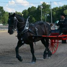 Carrie Hahn and her Percheron horse
